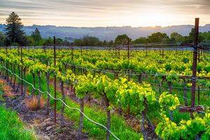 vineyard near california couples retreat location
